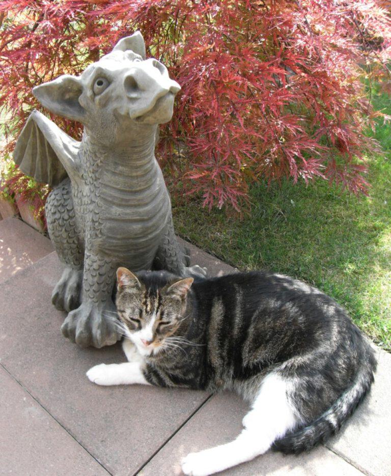 Katze mit Steinfigur Drache