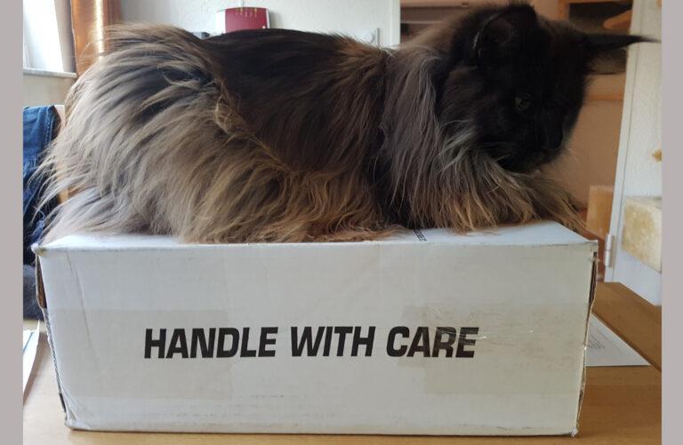 Katze sitzt auf Karton